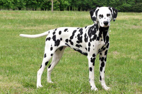 nombres para perro